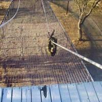 Harsh Obstacle course Fort Hunter Liggett